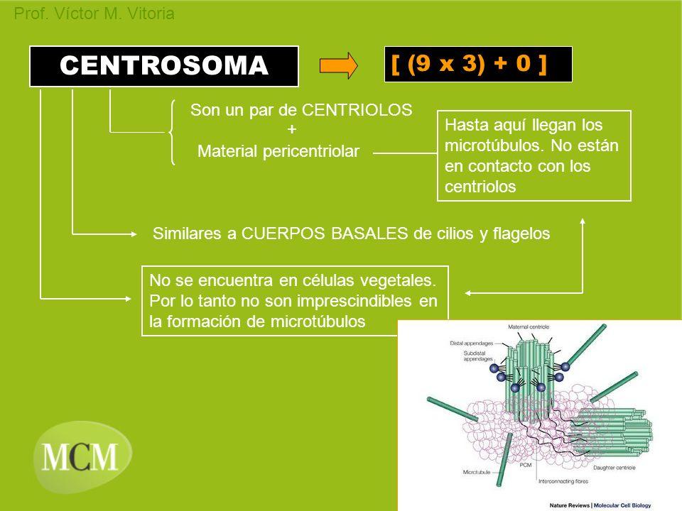 CENTROSOMA [ (9 x 3) + 0 ] Son un par de CENTRIOLOS